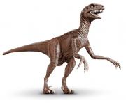 "Velociraptor ""Raptor"""